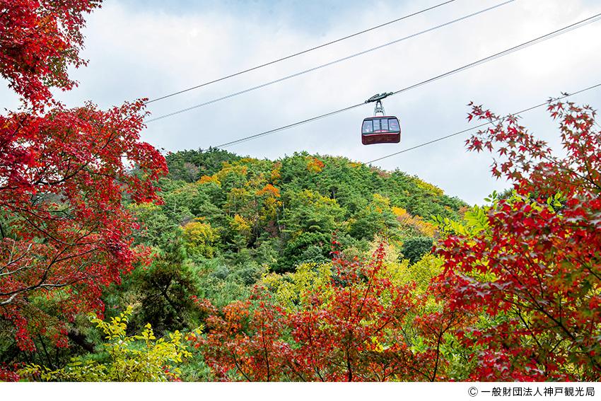 秋の六甲山の見どころ