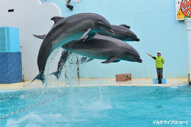 須磨海浜水族園の「さかなライブ劇場」が人気です!