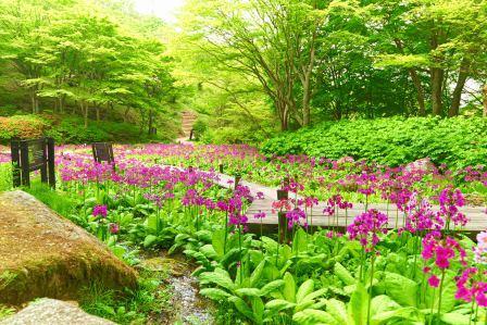 初夏の六甲山で花めぐり