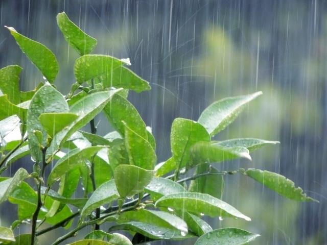 梅雨なのに、「水」「無」「月」とは、いかに?