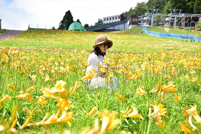 新緑が目に眩しい六甲山上で「初夏の花めぐり ROKKO フォトグラフィックガーデン」を開催中!