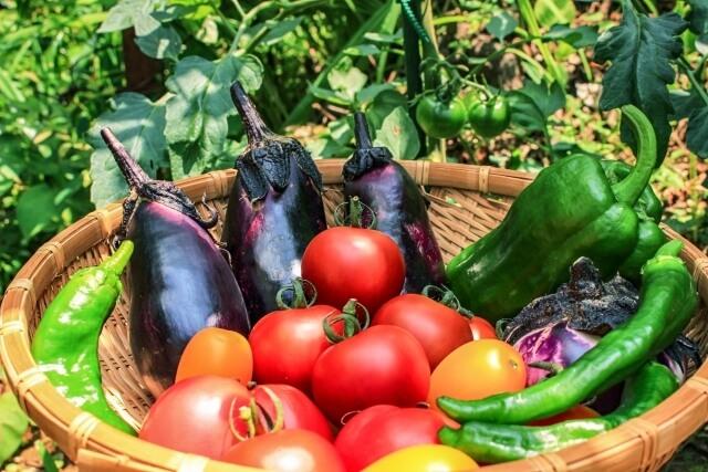夏野菜で暑さに負けない身体づくり!!